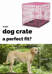 Best dog crates and playpens for labradors or large breeds for Best dog crates for puppies