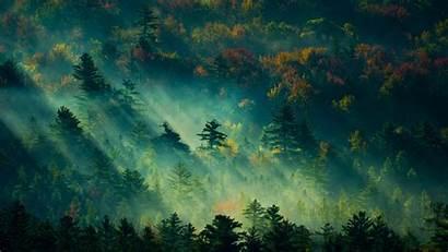 4k Forest Wallpapertip