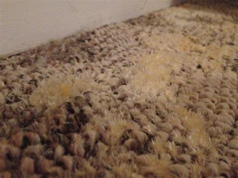 Yellow Boat Carpet by What Is This Yellow White Growth On Basement