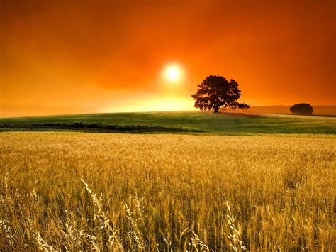 wallpaper sunset grass field nature