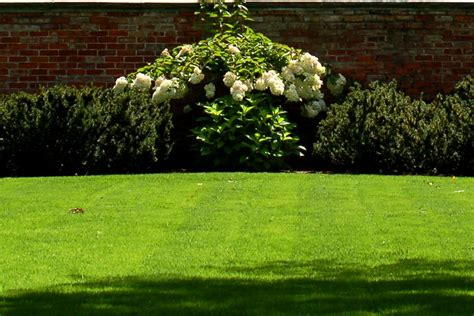 how to landscape my garden how to cut grass properly mowing and lawn care tips