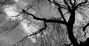 Taille Du Saule Pleureur : taille du prunier quand et comment tailler son prunier ~ Melissatoandfro.com Idées de Décoration