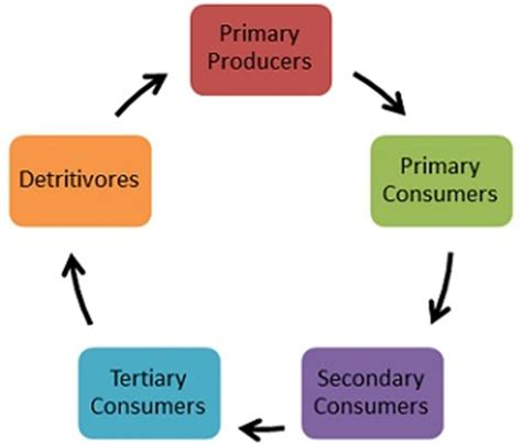multi cuisine meaning ecosystem on emaze