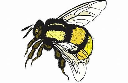 Bee Clip Bumble Clipart Bumblebee Cartoon Webstockreview