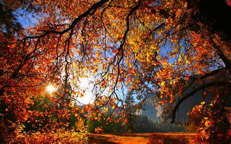 autumn, Fall, Season, Nature, Landscape, Leaf, Leaves ...