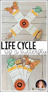 Third Of Life : life cycle of a butterfly fact fan life cycles stem ~ A.2002-acura-tl-radio.info Haus und Dekorationen