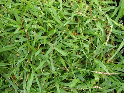 types of lawns grass types that thrive in granbury tx lawns lawnstarter