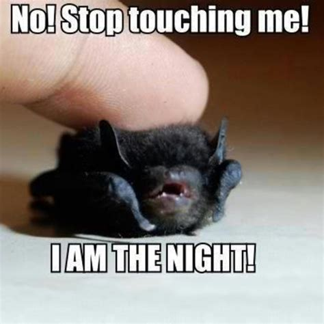 Bat Meme - no stop touching me i am the night image gallery know your meme