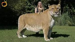 Biggest Animal Ever Lived On Earth