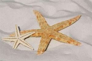 Etoile De Mer Dofus : l 39 toile de mer seraphim ~ Medecine-chirurgie-esthetiques.com Avis de Voitures