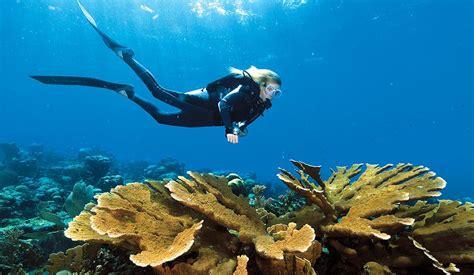 blue exploring  island  curacao scuba