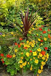 Jardiniere Fleurie Plein Soleil : d cor de pots pour terrasse fleurie gamm vert ~ Melissatoandfro.com Idées de Décoration