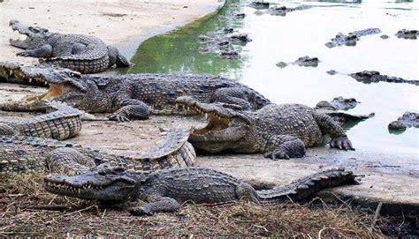 top  ideas  crafty crocodiles  pinterest