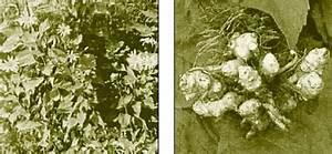Тербинафин мазь от грибка ног отзывы цена