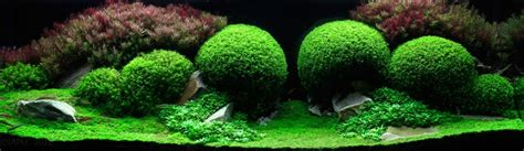 Most Beautiful Aquascapes by The Most Beautiful Freshwater Aquariums In The World 21