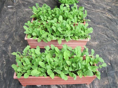 Container Gardening15 Best Vegetables That Grow Well In A