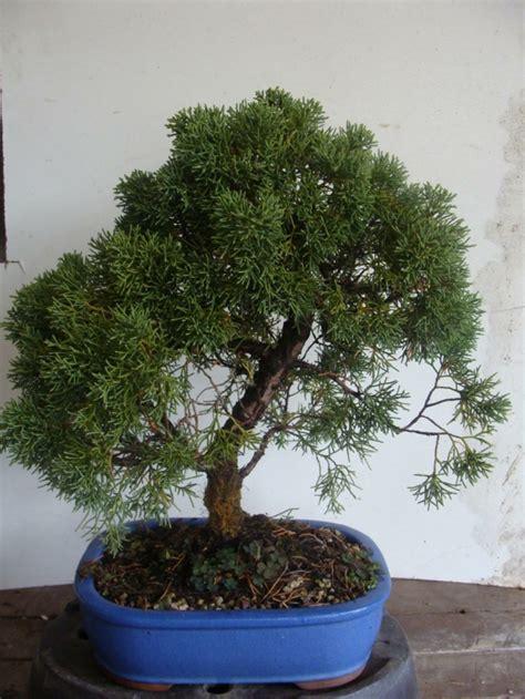 welche feng shui pflanzen sollten sie laut feng shui im