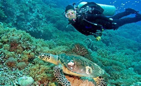 island coral pattaya tour flat cashback tours offers special featured