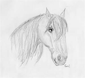 Horse Head Sketch by M3iik on DeviantArt