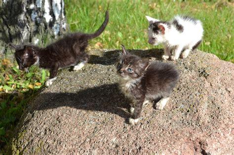 Pamestie kaķēni pošas uz mājām | liepajniekiem.lv