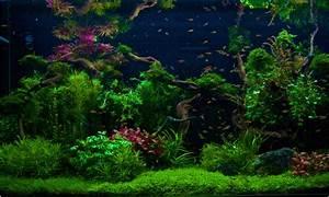 Co2 Rechner Aquarium : sie fragen wir antworten wie sollte ein aquascape ged ngt werden ~ A.2002-acura-tl-radio.info Haus und Dekorationen