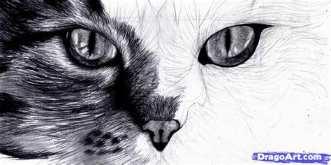 step    draw cat eyes