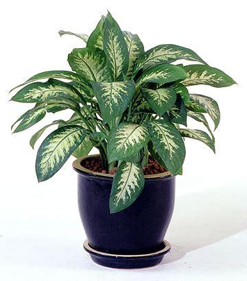 indoor house plants decorative indoor house plants decoration ideas