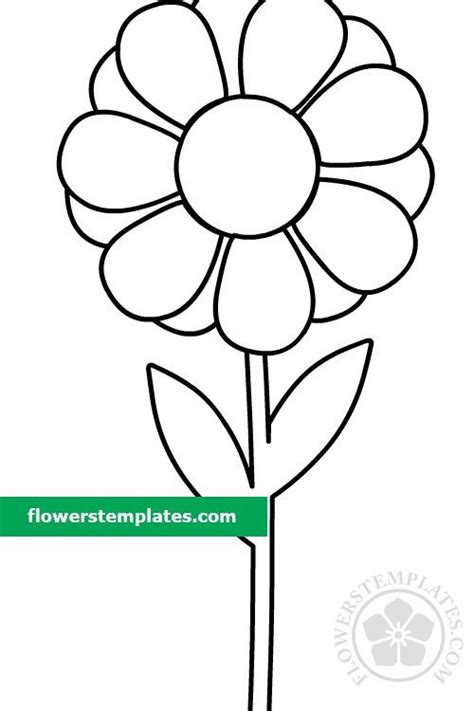 daisy  stem  leaves coloring page flowers templates
