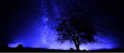 Night Stars Sky Star Galaxy Tree Fantasy