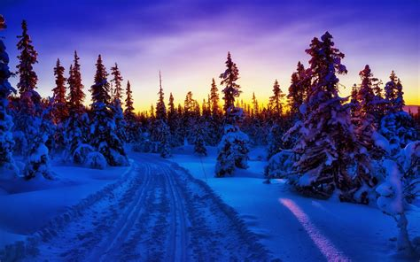 Winter Forest Snow Road Sunset Wallpapers