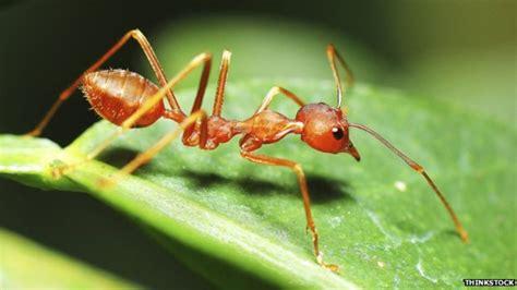 ants  heavy    humans bbc news