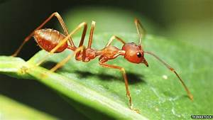 Are All The Ants As Heavy As All The Humans