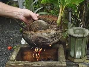 Noce di cocco Cocos nucifera Cocos nucifera Piante da interno Noce di cocco Cocos