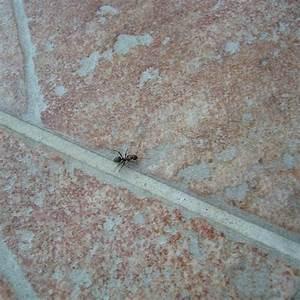 Mittel Gegen Ameisen Im Rasen : 11 nat rliche hausmittel gegen ameisen im haus und garten ~ Watch28wear.com Haus und Dekorationen
