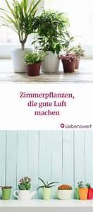 Große Zimmerpflanzen Wenig Licht : 7 zimmerpflanzen die die luft reinigen pinterest zimmerpflanzen pflanzen und balkon ~ Markanthonyermac.com Haus und Dekorationen