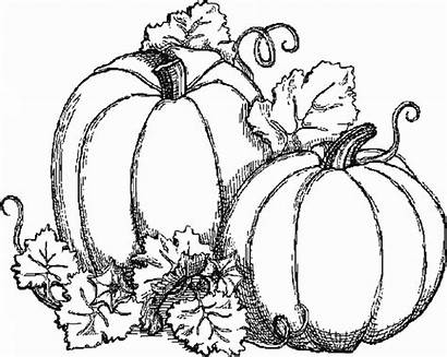 Pumpkins Coloring Drawings Autumn Fall Pages Adults