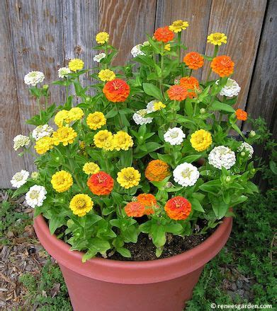 30 Best Container Gardens From Seed Images On Pinterest