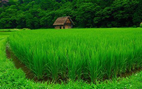telecharger la meteo sur mon bureau gratuit fond écran paysage nature chs rizière wallpaper hd