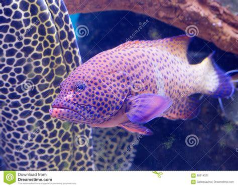 aquarium cernia pesce grouper fish spotted acquario whole macchiata spots body