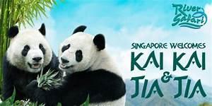 Singapore is ready for Kai Kai & Jia Jia