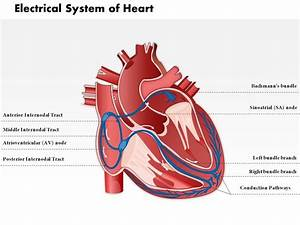 0514 Electrical System Of Heart Medical Images For