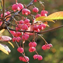 Exotische Früchte Im Eigenen Garten : kiwibeeren mini kiwi pflanzen und pflegen mein sch ner ~ Lizthompson.info Haus und Dekorationen