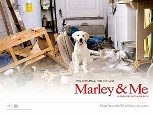 Marley and Me movie wallpaper Wallpapers - HD Wallpapers 19754