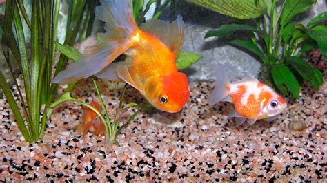 cours de cuisine lille pas cher quel aquarium pour poisson 28 images quel poisson