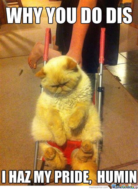 Depressed Meme - depressed cat memes image memes at relatably com