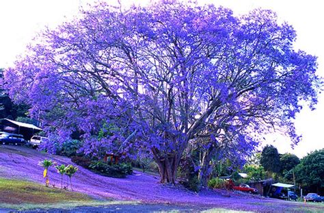 20 strange and beautiful trees from across the world page 9 of 10