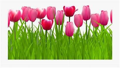 Tulip Border Clip Clipart Cartoon Horizontal Flower