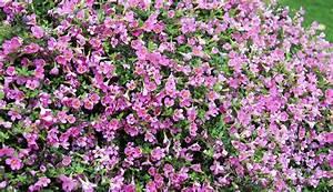 Bodendecker Blaue Blüten : provisorischen grabh gel bepflanzen ~ Frokenaadalensverden.com Haus und Dekorationen