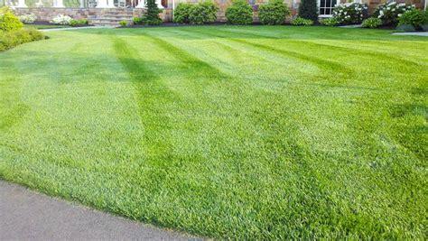 fescue sod sod grass sod install dwarf fescue sod lawn image titled choose sod for your yard step 13