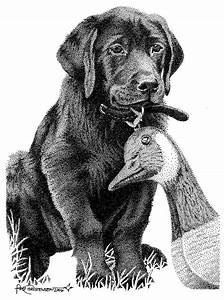 Black Lab Puppy Drawing by Rob Christensen